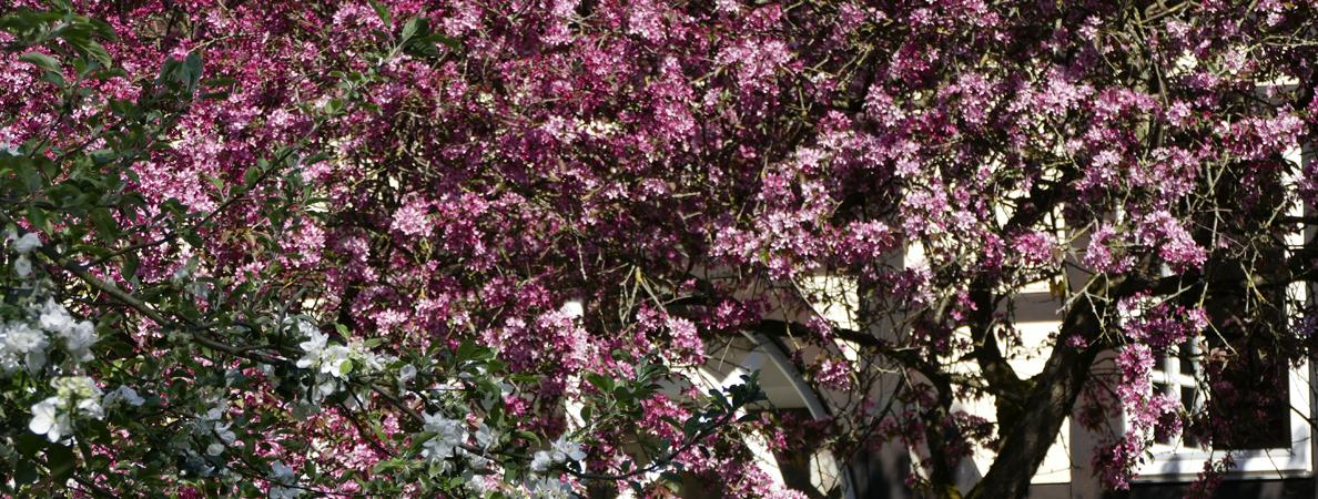 Schloss Rückseite Frühling