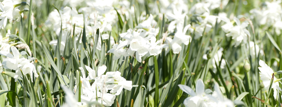 Stadtpark Blumen Frühling