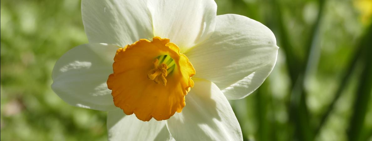 Stadtpark Blumen Frühling II