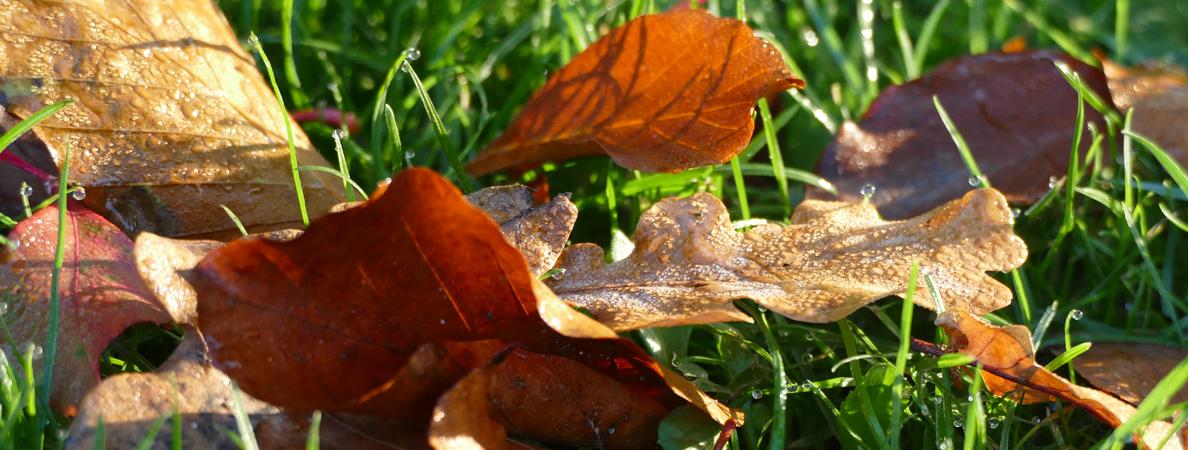 Banner Herbst 1